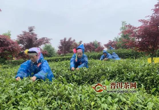 2020年贵州春季斗茶大赛圆满谢幕!