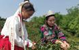 昆明宜良第五届宝洪茶文化旅游节启动