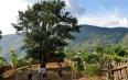 云南澜沧邦崴古茶树的发现考察论证 及其文物价值与世界茶树原产地问题(节选)
