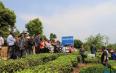 滇西应用技术大学普洱茶学院赴澜沧县 助力茶产业脱贫