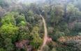 一片古茶林也能成为世界遗产吗?