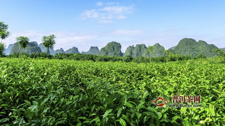 龙峰茶历史文化