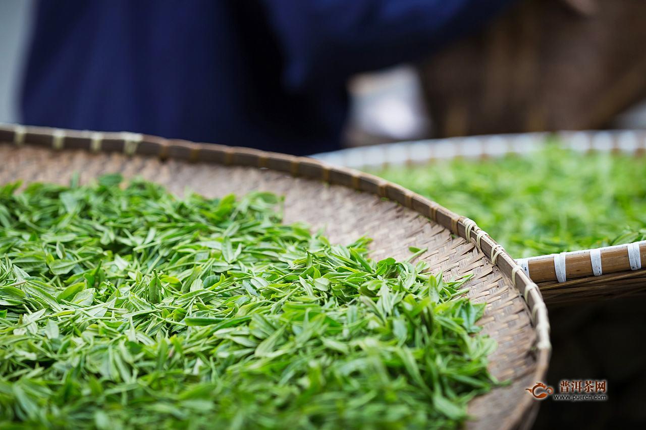 邓村绿茶是好茶吗?