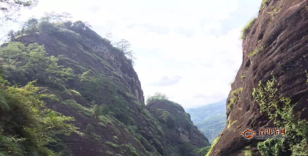 解析岩茶的山场