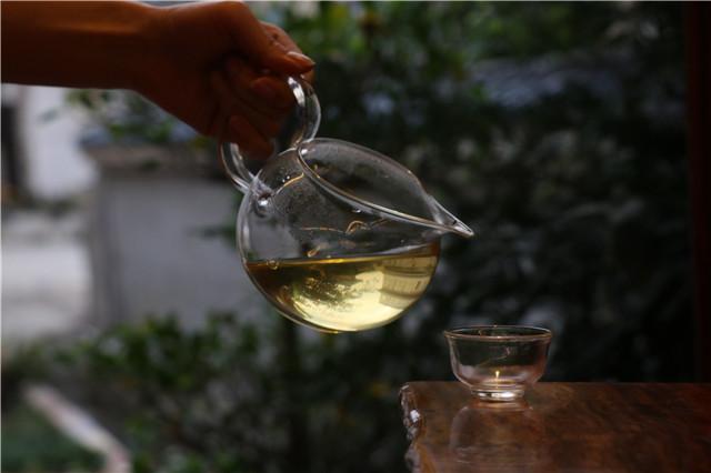 普洱古茶树的品鉴奥妙