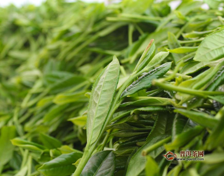 庐山云雾红茶还是绿茶