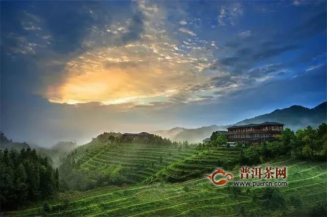 传统知名茶企华祥苑玩转直,倡导全民饮茶