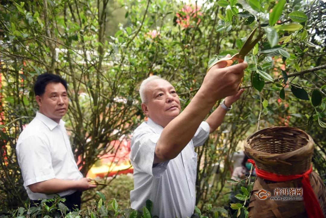 """300多名茶友茶人相聚""""茶乡酒镇""""东平品鉴政和白茶,助推茶品质提升!"""