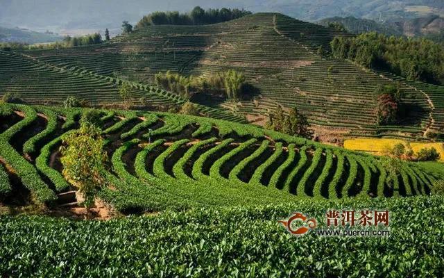 """海峡两岸茶业交流协会关于批准""""松溪白茶""""团体标准立项的公告"""
