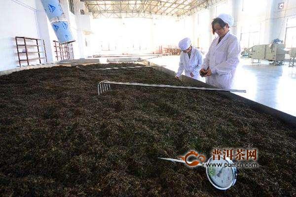 泾阳茯茶的制作工艺