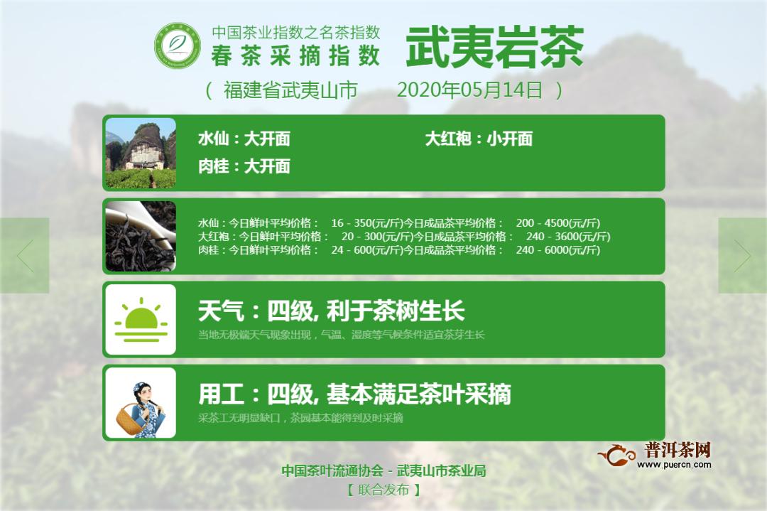 武夷山水仙、肉桂告别2020采摘季!