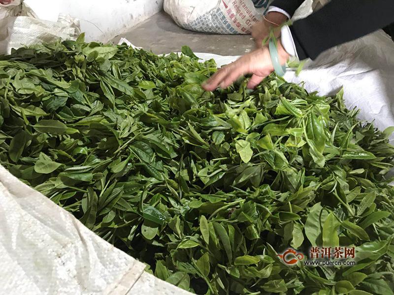 青砖茶的生产工艺