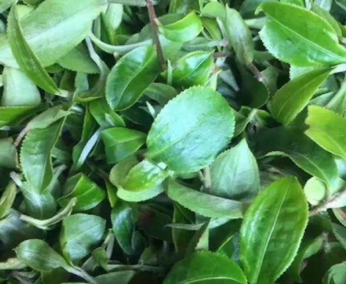 茶友说:茶有它独特的口感、魅力以及多重性