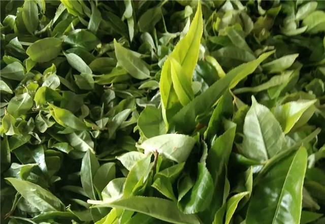 5·21 国际饮茶日!中国茶一步步走向世界的内幕