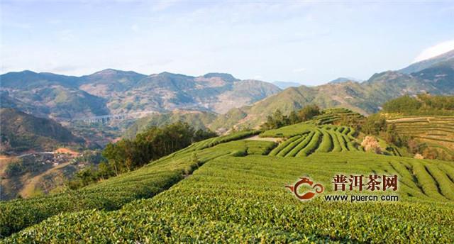白茶产至那几个省?福建、云南、陕西