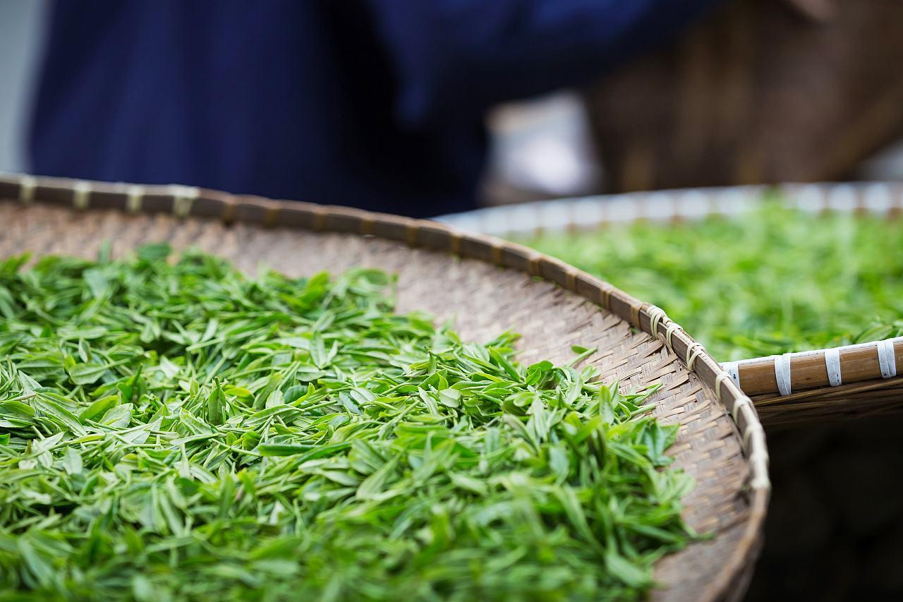 漳州:今年春茶产量1.74万吨产值达11.94亿元