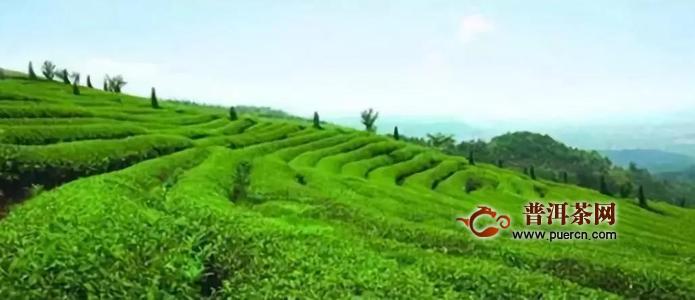 除了六堡茶文化创意产业园,梧州今年的茶目标还有这些