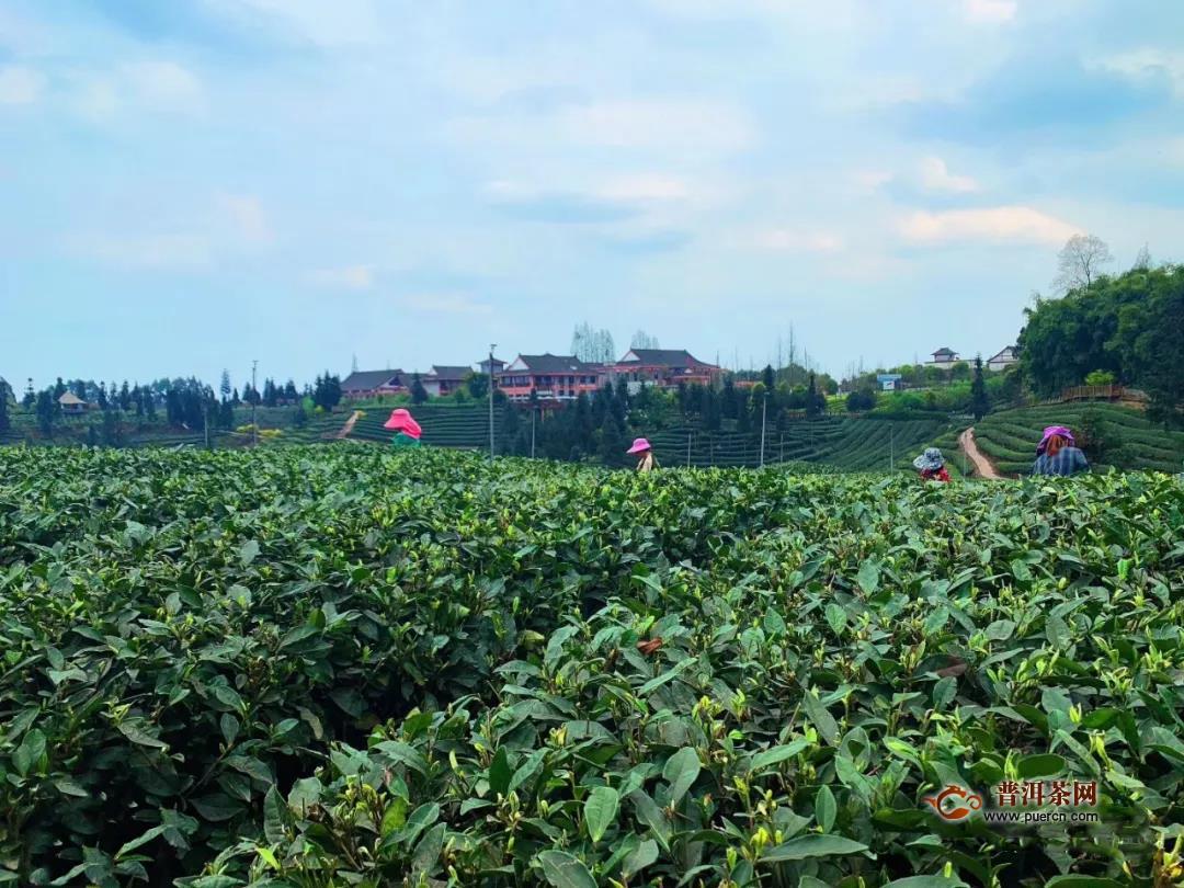 蒙顶山茶品牌价值达37.14亿元,雅安藏茶品牌价值19.90亿元!