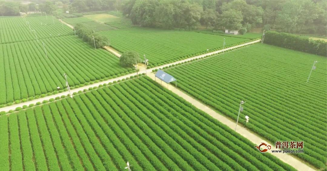 2020年杭州茶产业指数发布