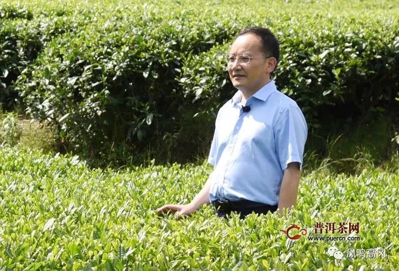 县委书记王继松为凤冈锌硒茶代言带货