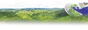 """勐海县福海茶厂 绿色有机助力""""千亿云茶""""产业发展"""