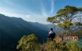 被遗忘的罗东山万亩野生茶树群落