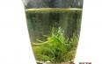 喝绿茶的好处与禁忌
