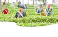 七彩云南·庆沣祥茶业助推茶产业高质量发展