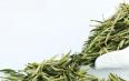 安徽黄茶属于什么茶叶种类