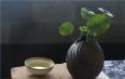 【原创】酒越喝越躁,茶越品越静