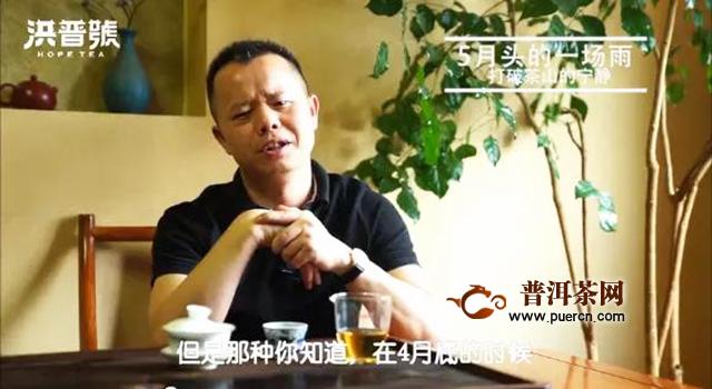 洪普号茶山味道第33期:2020春茶到底怎么样?老洪在茶山上的酸甜苦辣!