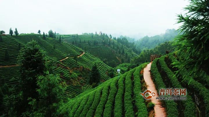 茶旅融合再发力,谱写文旅新篇章