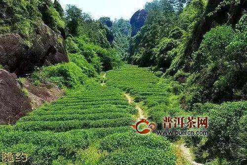 怎么区分武夷岩茶的正岩、半岩、洲茶?