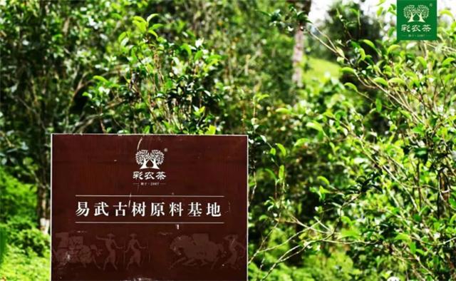 彩农茶:古树茶的优点