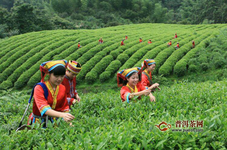"""""""郴州福茶""""将在2020第十二届湖南茶博会全面亮相"""