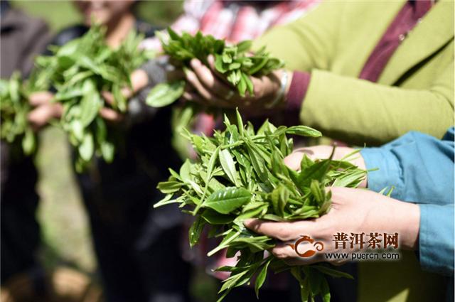 太平猴魁属于什么绿茶图片
