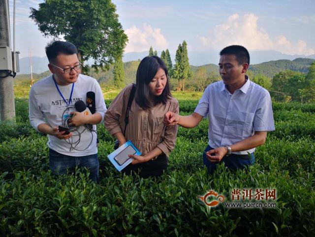 杨凌科技引领茶产业发展 试验示范站助推脱贫攻坚