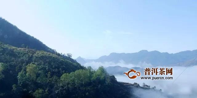 彩农茶:红酒论酒庄,普洱讲山头?