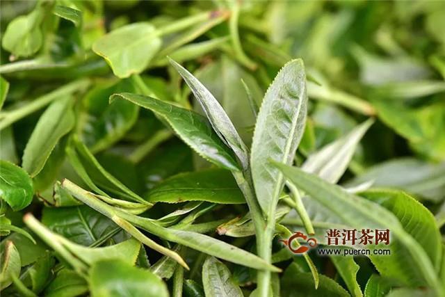 彩农茶:拼配与纯料续