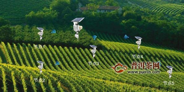 """""""中国数谷""""贵阳推动产销智慧对接,实现茶叶全程动态监控与智能管理!"""