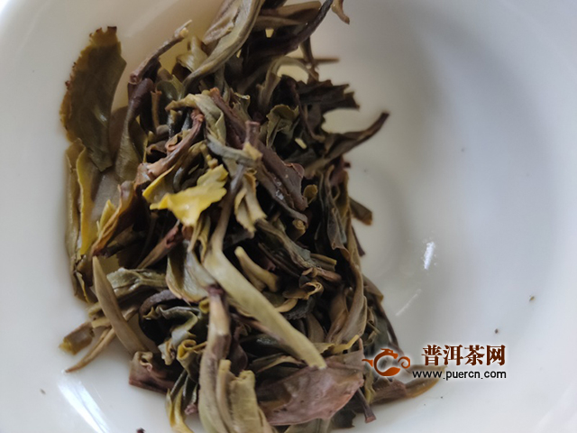 冬雪难藏:2019年洪普号探秘系列雪藏生茶