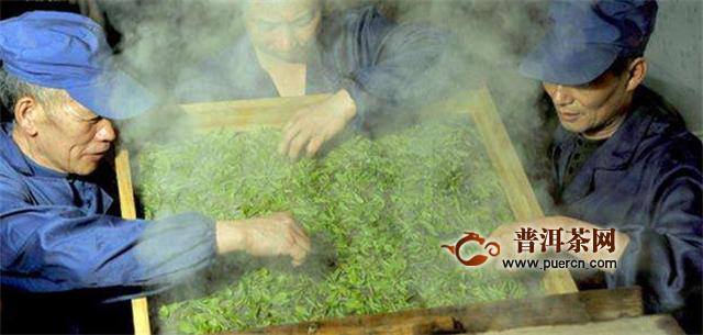 恩斯硒茶是绿茶吗