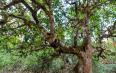 古树茶发展史