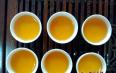 正山小种的茶树是什么茶