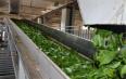 一场由新基建促成的安化黑茶产业变革
