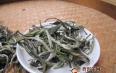 白茶的颜色为什么是绿色的