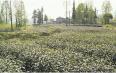 雅安雨城区打造特色园区,促进藏茶产业高质量发展