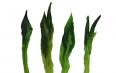 绿茶粉有什么功效与作用