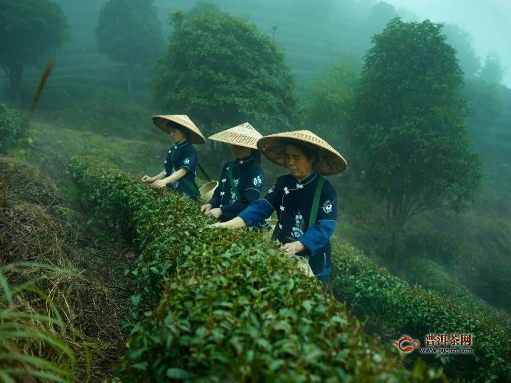中国绿茶目前发展现状