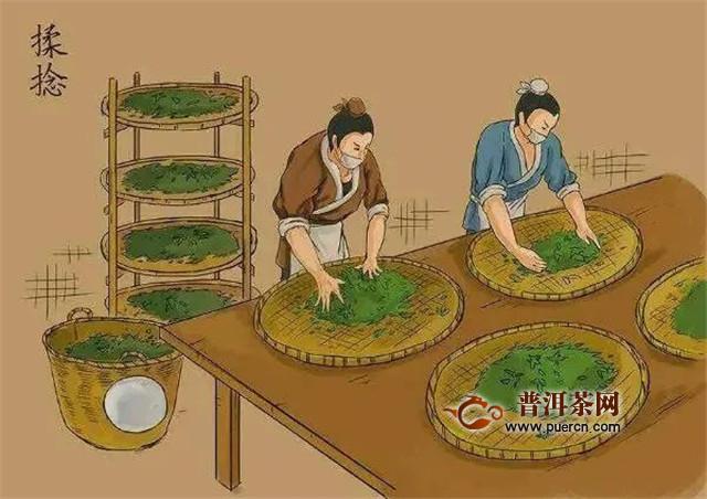 彩农茶:普洱茶生产制作工艺
